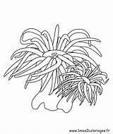 Dessin Plante Seaweed Coloriage Coloring Plantes Printable Sur Colorier Imprimer Seabed sketch template