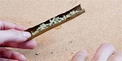 Blunt Roll Smoke Rolling Wrap Breaks Weed