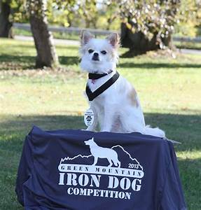 Iron Dog Ofen : a chihuahua toughs it out with the big dogs izzy and the iron dog challenge american kennel club ~ Frokenaadalensverden.com Haus und Dekorationen