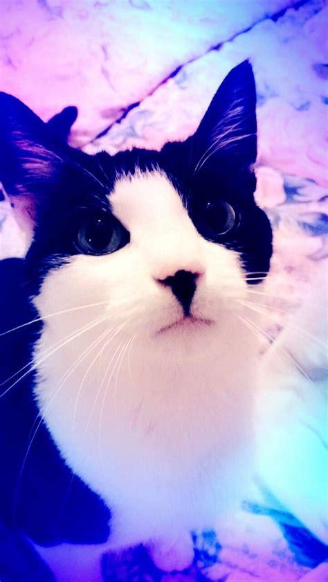 cats tuxedo cat nosy named