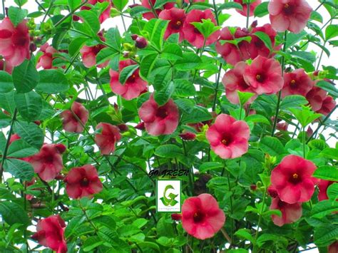 seeds for sale flower seeds plants cuttings for sale