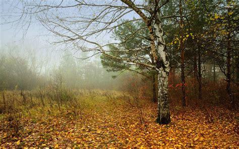 foggy, Fall, In, The, Forest, Autumn, Tree, Leaf, Foliage ...