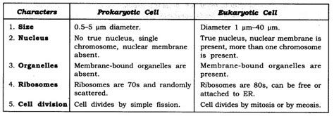 Draw And Label Animal Cell
