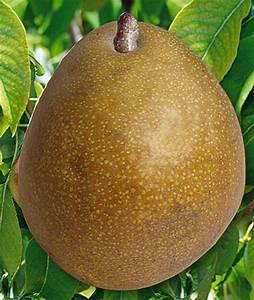 Conservation Des Poires : les meilleures vari t s de poires pour le jardin d amateur ~ Melissatoandfro.com Idées de Décoration