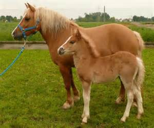 cloned horse birth foal healthy perfectly gives had