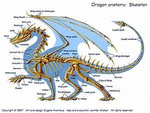 Atomic Surgery  Dracorex Hogwartsia