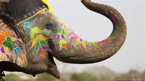 elephant wallpaper animals wild elephant india cute