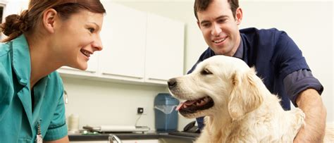 The best pet insurance ever by nationwide®. Why it's a Good Idea to Get OnePlan Pet Insurance