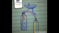 Heron's Fountain Particle Diagram Video - YouTube