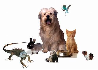 Pets Animals Pet Many Animal Care Veterinarian