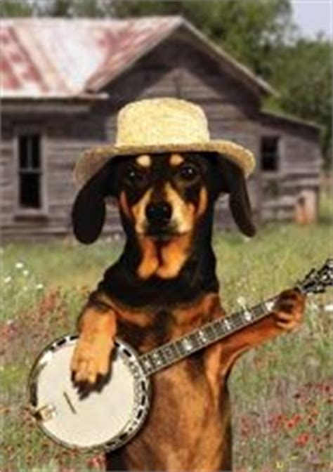 dachshund cards images musical greeting cards