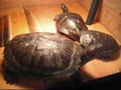 basking l for turtles how to make an above tank basking area for turtles how