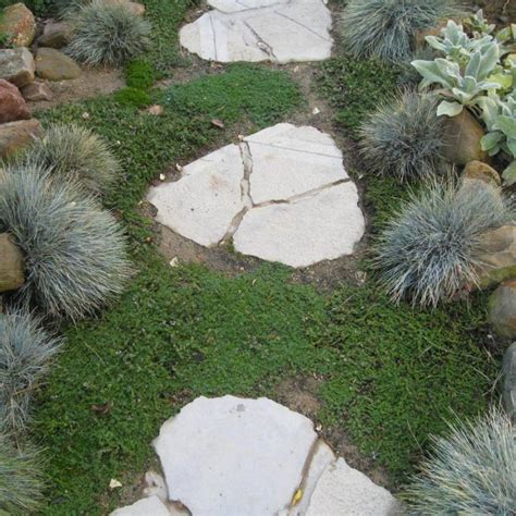 Aiuole Da Giardino Con Sassi aiuola con sassi o vialetto da giardino vivaio un