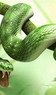3D Wallpaper Green Snake | 2021 Live Wallpaper HD
