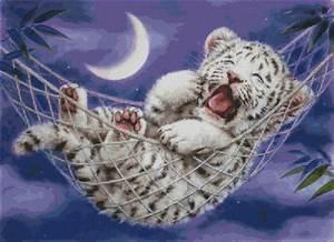 Baby Color Chart Hammock White Tiger Harai117