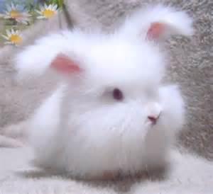 アンゴラ:画像 : かわいい動物の赤ちゃん ...