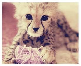 Super Cute Baby Animals Jaguar