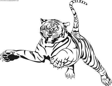 dessins de coloriage lion  tigre  imprimer
