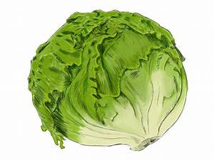 How to draw LETTUCE