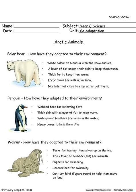 arctic worksheet arctic animals arctic animals animal