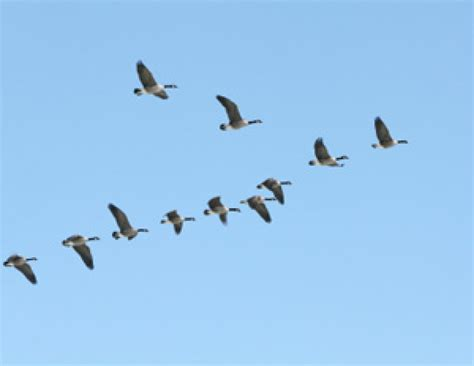 do birds fly at why do birds fly south for the winter mental floss