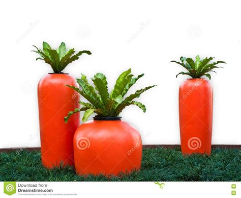 Healthy Living And The Big Carrot
