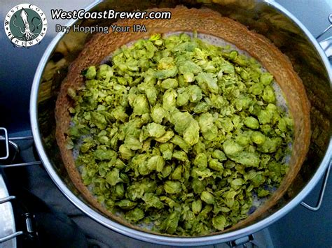 What Does Ipa Stand For In Beer by How To Dry Hop Beer