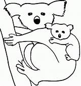 Coloring Wombat Koala Pages Printable Popular sketch template