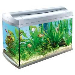 design aquarien xing fu be careful where you place your aquarium