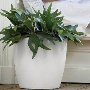 Grand Pot Plante : plantes et jardins votre jardinerie en ligne gamm vert ~ Premium-room.com Idées de Décoration