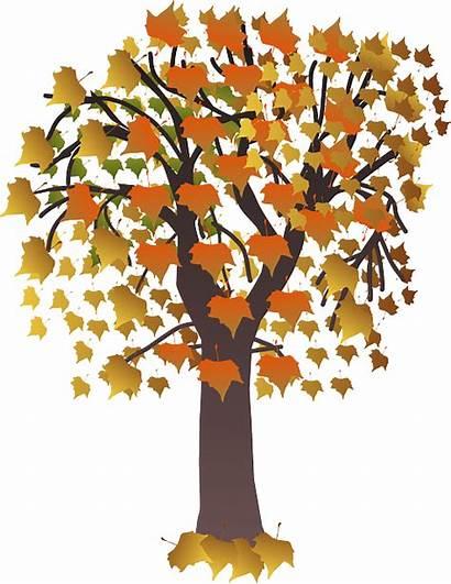 Autumn Pixabay Foliage Brown Fall Leaves