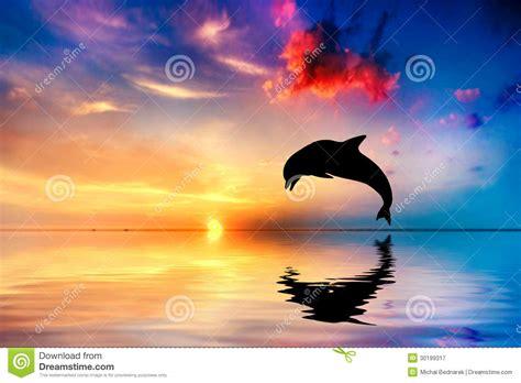 beautiful ocean  sunset dolphin jumping royalty