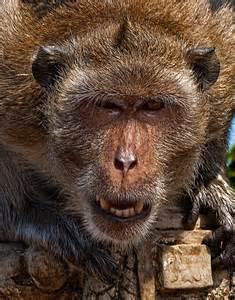 Animal Close Up Photography