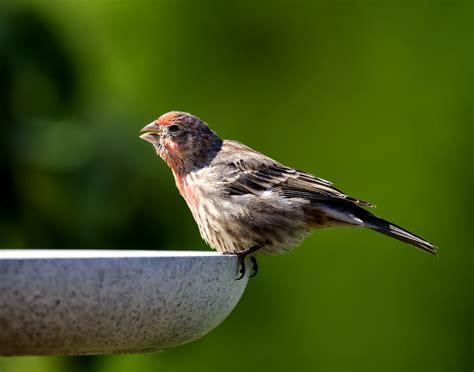 Backyard Birding In Small Spaces  Backyard Birds The