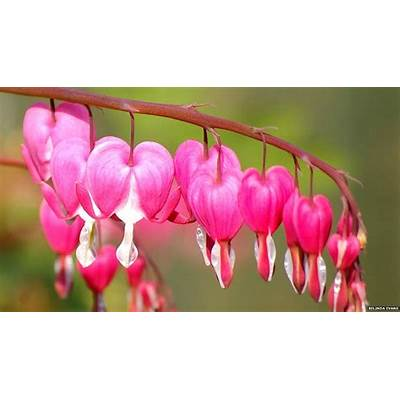 Valentine Day Hearts In Nature ~ Quotes