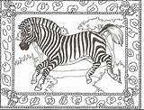 Zebra Coloring Pages Zebras Printable Head Adult Animal Print Sheets Colouring Baby Cute Animals Cartoon Adults Getcoloringpages Sign Pdf Adorable sketch template