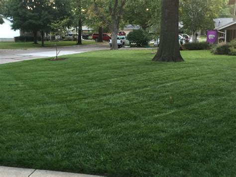5 Care Tips For A Greener Lawn
