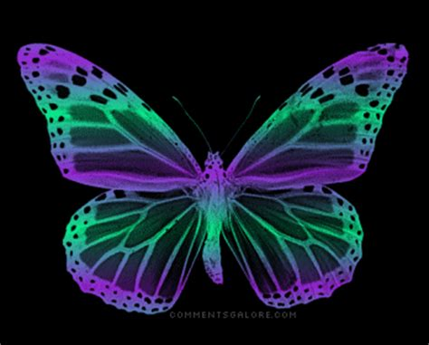 Animated Butterfly Wallpaper - animated butterfly pictures animal