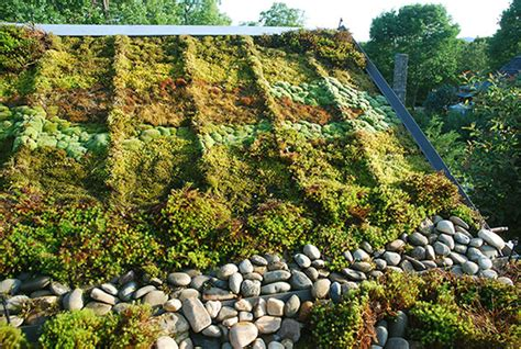 5 Environmental Benefits Of Moss Gardening How To Install Roof Vent Pipe Flashing Red Inn Oklahoma City Airport Fairgrounds Ok Get Rid Of Asbestos Tiles Metal Roofing Materials Spokane Wa Rv Cleaning And Treatment Millard Gutter Omaha Ne Watertight Athens Ga Pace West Palm Beach Fl