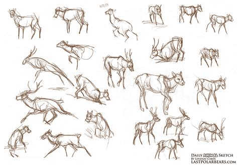 lindsay cibos art blog daily animal sketch wolves
