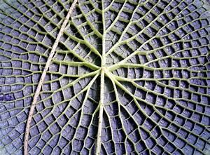 269 Best Voronoi  U0026 Delaunay Diagrams