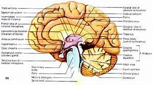 Brain And Spinal Cord At Lake Michigan Catholic