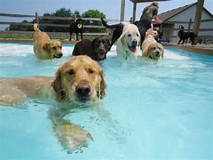 Video Pour Chien : piscine pour chiens video 2tout2rien ~ Medecine-chirurgie-esthetiques.com Avis de Voitures