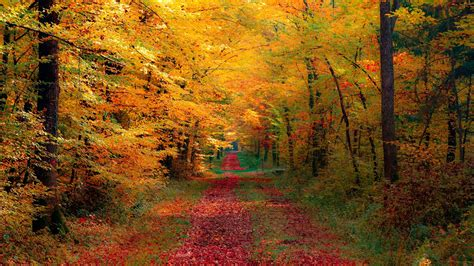 Autumn Wallpapers For Mac by 1920x1080 Autumn Forest Desktop Pc And Mac Wallpaper