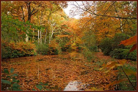 Garten Herbst Setzen by Garten Im Herbst Jetzt Mit Blumen Sch 246 Ne Akzente Setzen
