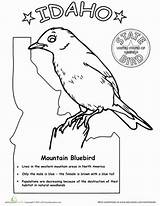 Idaho Bird State Worksheet Worksheets Birds Bluebird Coloring Pages Printable Mountain Kid Education Virginia Info Science Own sketch template