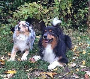 Droguerie De L Eden : accueil elevage de l 39 eden australien eleveur de chiens ~ Dailycaller-alerts.com Idées de Décoration