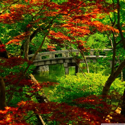 ipad hd wallpapers display retina japanese kyoto garden japan fall background landscape nature gardens autumn zen word iphone pond colorful