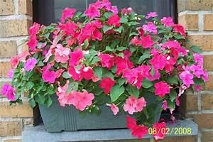 Jardiniere Fleurie Plein Soleil : de belles jardini res ~ Melissatoandfro.com Idées de Décoration
