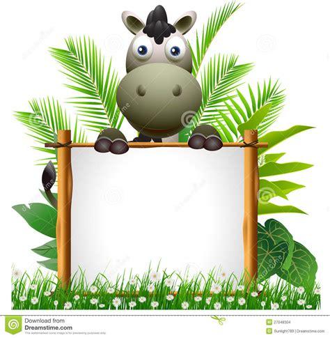 cute zebra cartoon  blank sign stock illustration